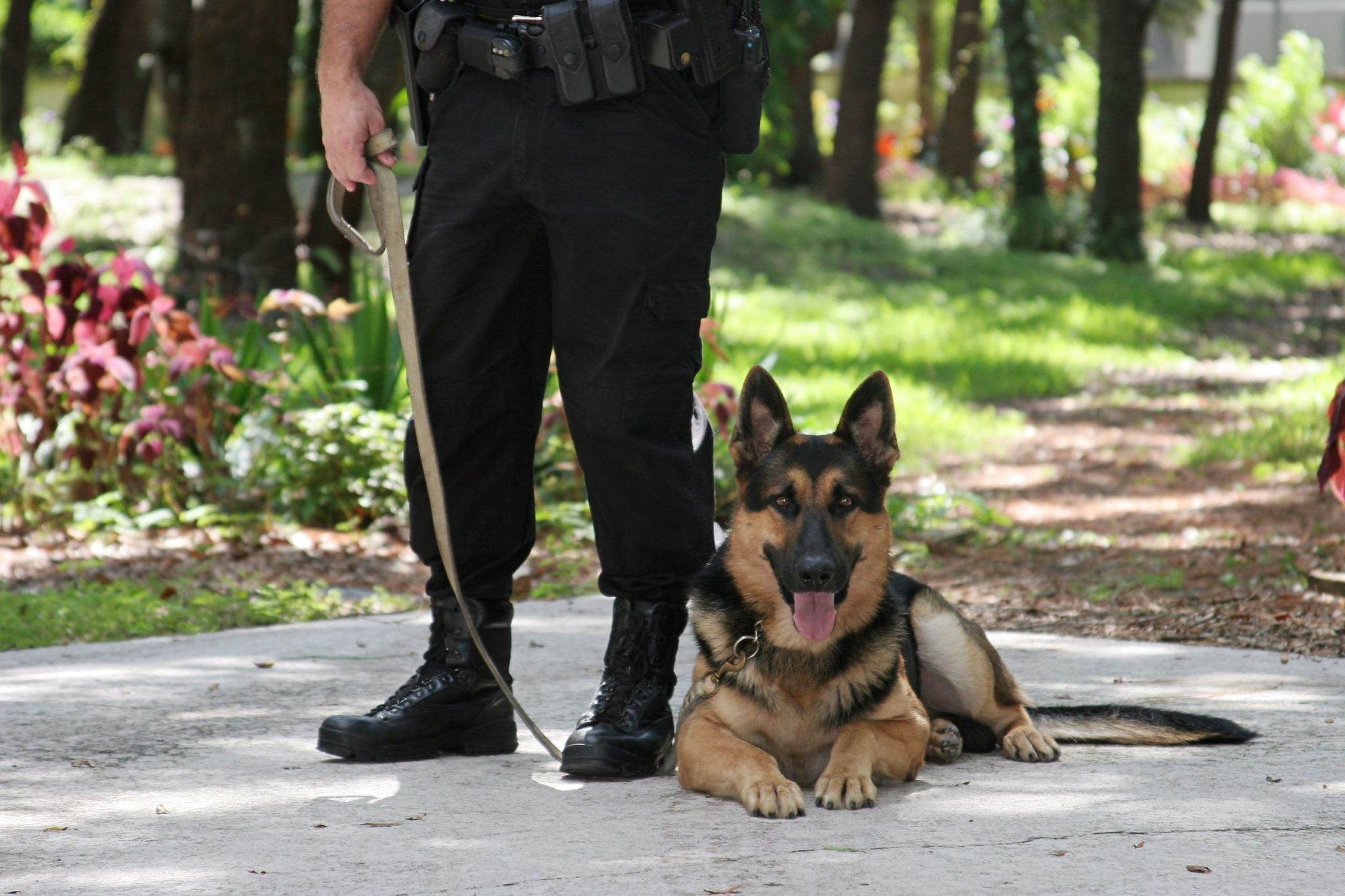 Lawsuit Against Use of Police Attack Dog in Routine Arrest Gets Court Approval to Proceed